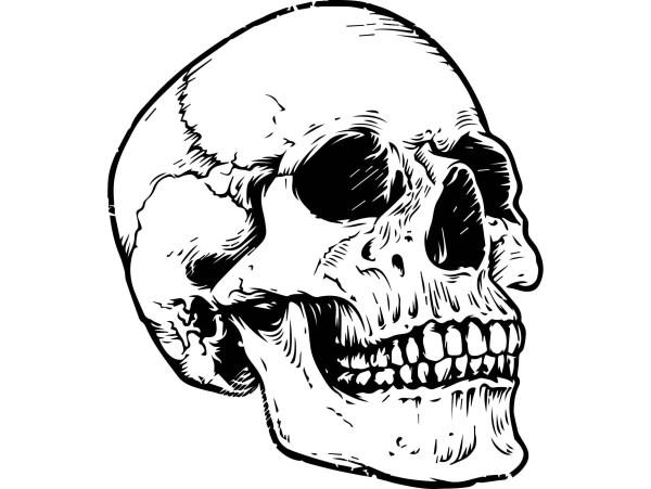 Skull Head Dead Skeleton Death Bone Art Human Horror