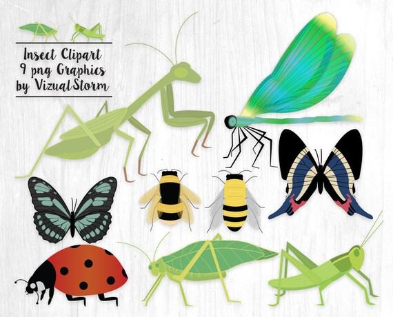insect clipart bug graphics ladybug