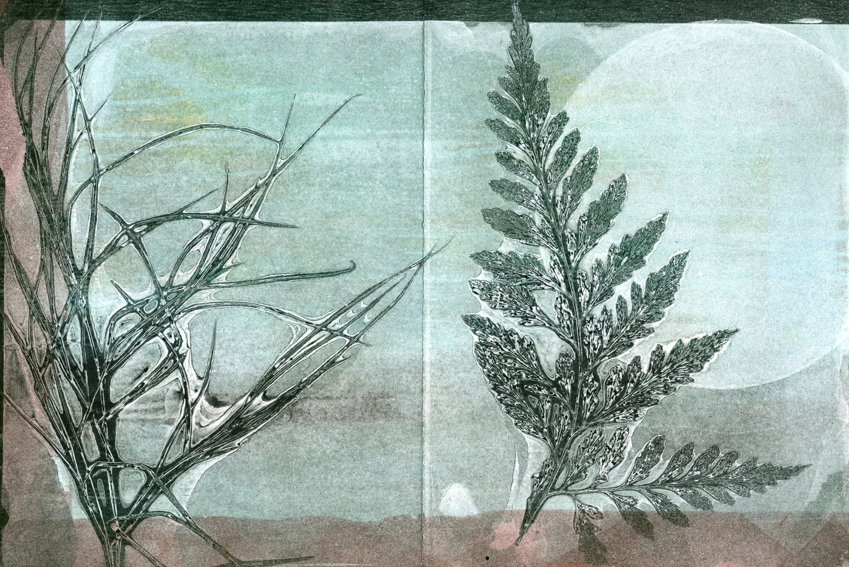 blank note card set of 4, original botanical monoprint - 88editions