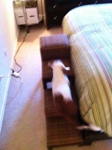 Собаки / животное шаги - 4 шага - обитые