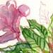 Balsam Bouquet - an original floral artwork