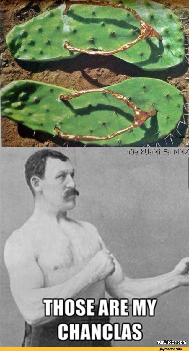 Cactus Pictures And Jokes Funny Pictures Amp Best Jokes Comics Images Video Humor Gif