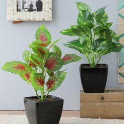 Artificial Plants For Living Room Wicker Chair Buy With Pot Combo Of 2 Home D Cor And Money Plant Coleus By Foliyaj Online Shopping Indoor