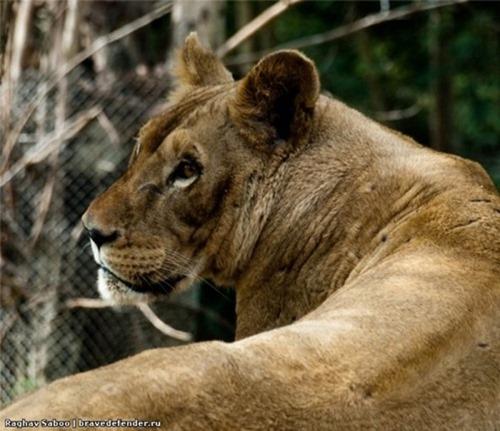 Обитатели национальных парков и зоопарков Таиланда (8 фото)