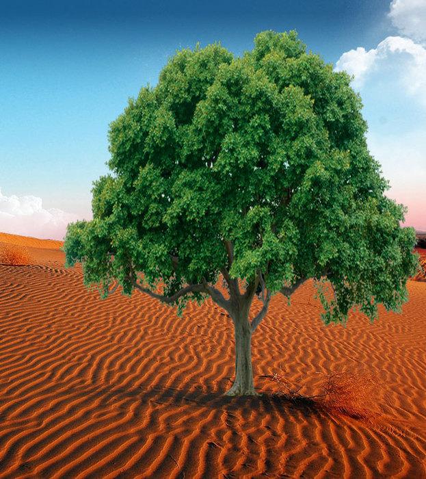 tree (623x700, 174Kb)