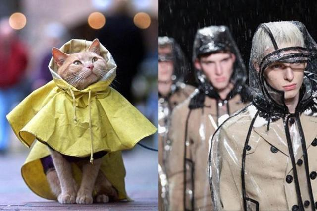 Осень. Трудный выбор самых лучших дождевиков, плащей, зонтов, сапог, джинсов...