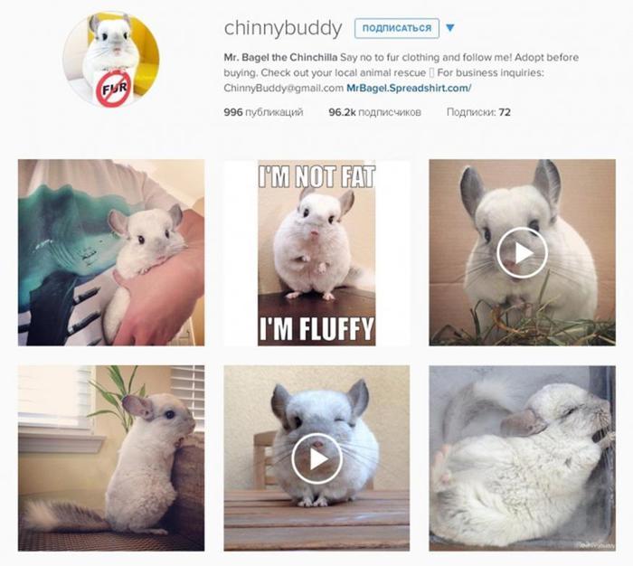 Типы блогеров Instagram: от красоток до котиков