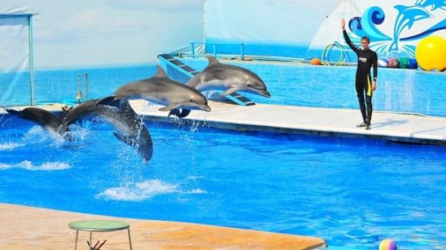 Зачем дельфины делают акробатические прыжки?