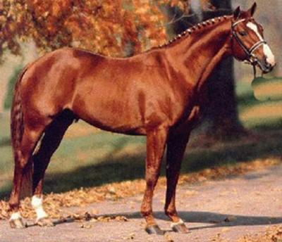 Породы лошадей. Что означает этот термин?