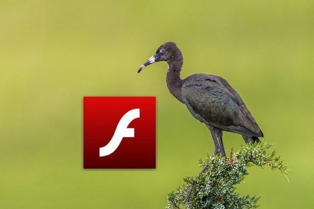 Отключение автоматической загрузки флешек в браузере Opera