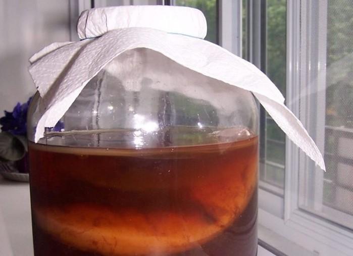 Как чайный гриб стал русским национальным напитком