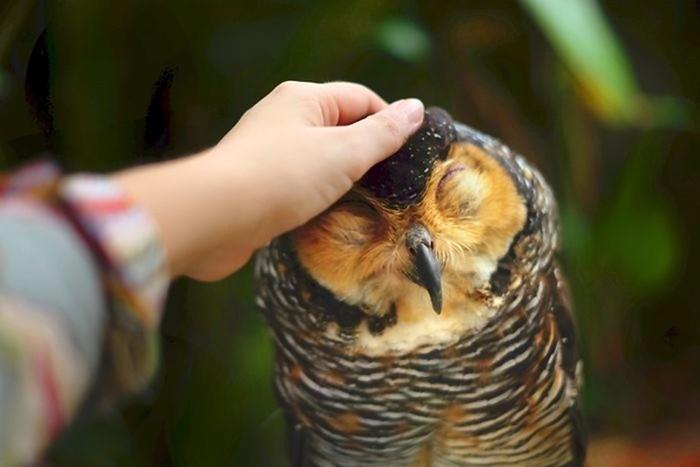 Удивительные фотопортреты сов