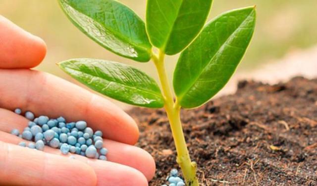 Как растения добывают свою пищу?