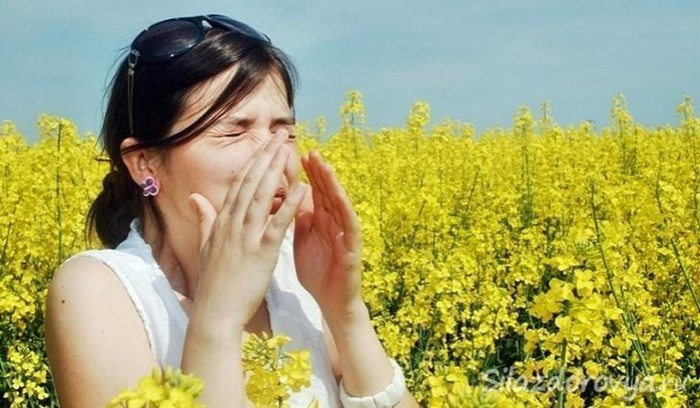 Польза и вред семечек подсолнуха