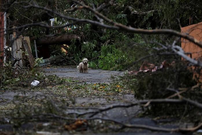 Последствия урагана «Мария» на Карибских островах