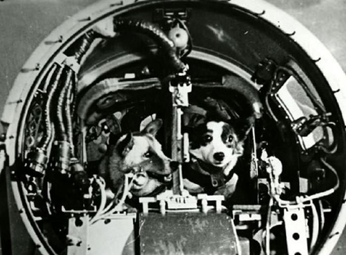 Дезик и Цыган— первые животные, поднявшиеся к верхним слоям атмосферы