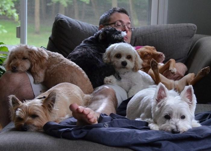 Подтвержденные научными исследованиями причины завести собаку