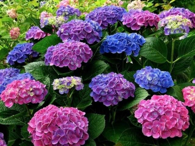 Пятерка бесполезных советов для садоводов