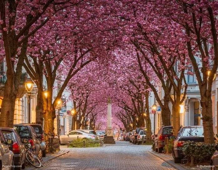 Удивительная красота деревьев из разных уголков мира