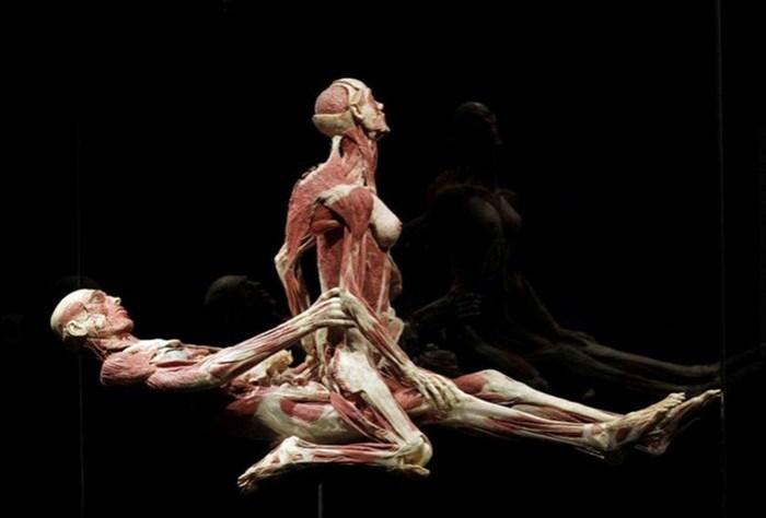 6 шокирующих анатомических музеев мира