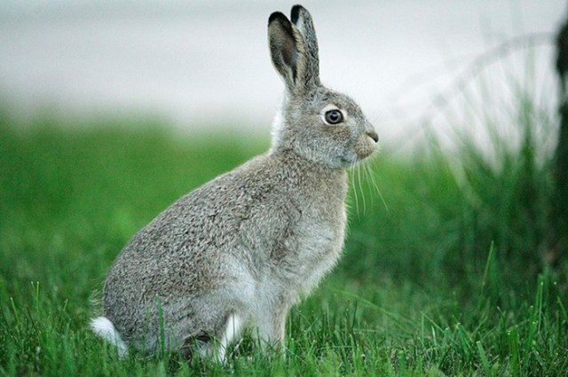 Почему запрещено было есть крольчатину на Руси