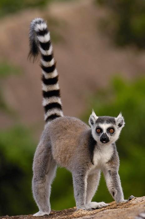 Животные, которые водятся только в одном месте Земли