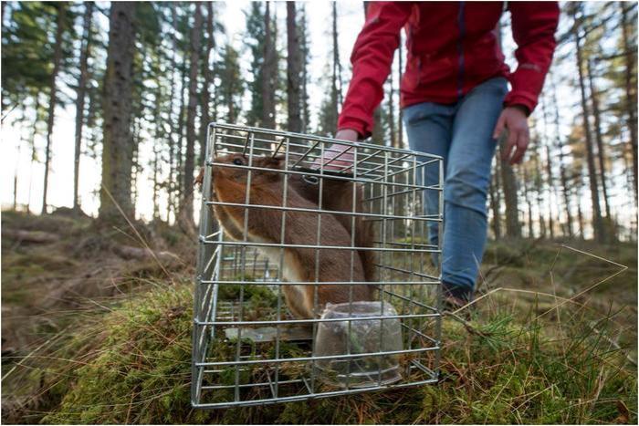 Победители английского конкурса фотографий дикой природы 2017