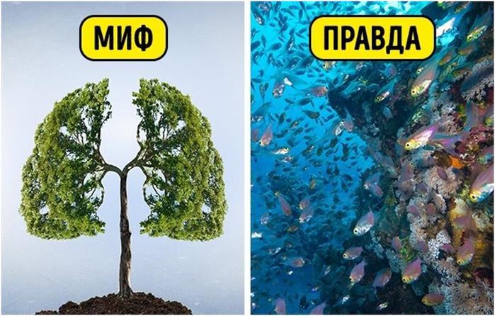 Экологические мифы нашей реальности