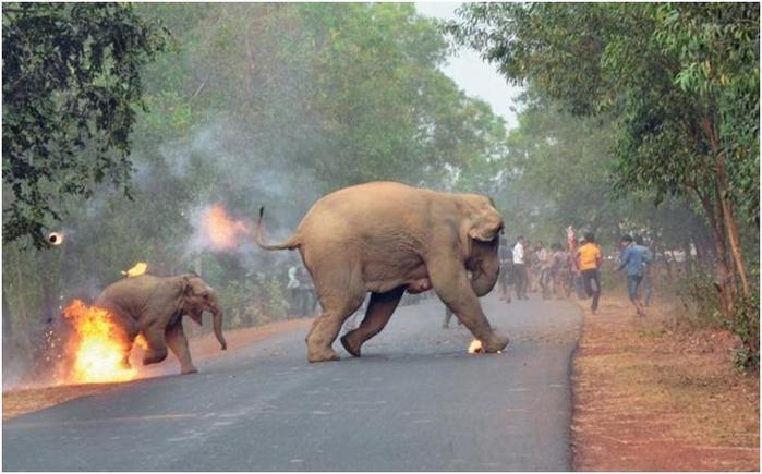 Фотография слона со слонёнком, спасающихся от толпы людей, победила в конкурсе