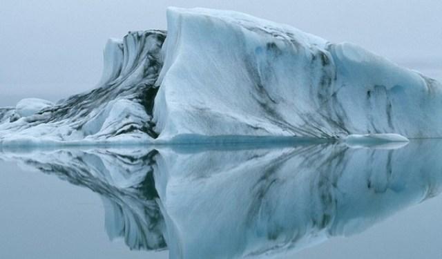 Спасительный холод? Процесс анабиоза широко распространен в природе