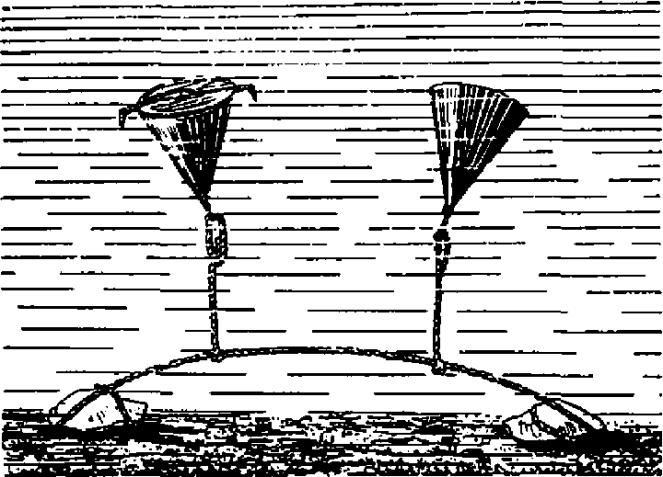 Что необходимо знать о торпедах: от самой первой до самой быстрой