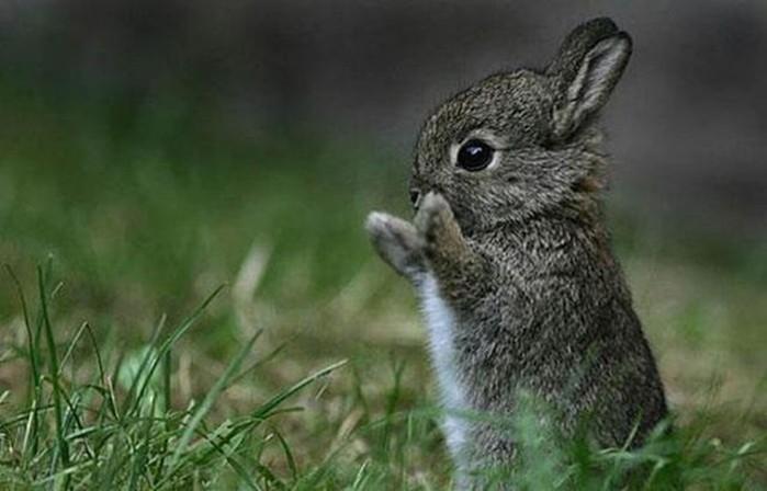 Детеныши животных— милые фотографии
