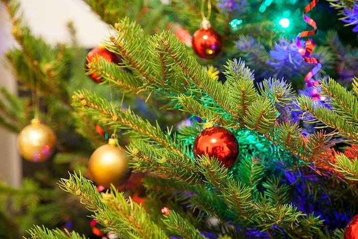 5 вариантов, как можно использовать засохшую новогоднюю ёлку