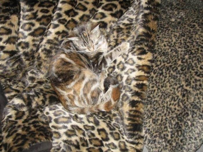Милые домашние животные— мастера маскировки!