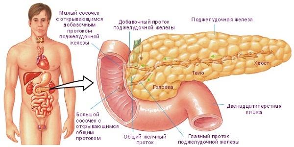 4 эффективных рецепта для лечения поджелудочной железы