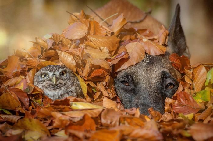 Фотограф Таня Бранд и прекрасная дружба овчарки и совенка