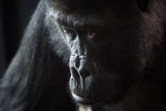 Жизнь самых интересных животных из разных уголков мира (фотографии)