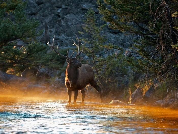 Самые ядовитые животные на Земле