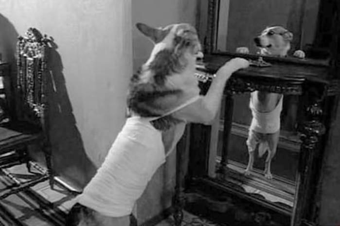 Как Евгений Евстигнеев и пес Карай снимались в фильме «Собачье сердце»