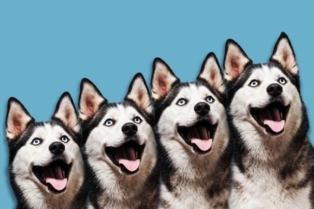 Возмутительно, дорого: сколько стоит и кому нужно клонировать собак