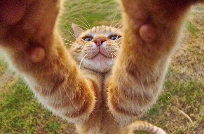 Всемирный флешмоб: фотоконкурс на самую длинную кошку