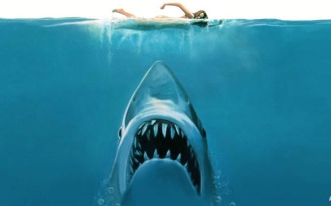 Настоящие челюсти: как одна белая акула держала в страхе Атлантическое побережье