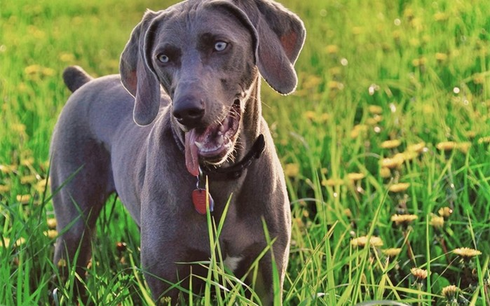 Как наши собаки с нами разговаривают: что означают сигналы животного