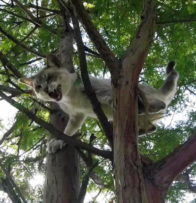 Американский пенсионер стал серийным спасатель котов: он снимает животных с деревьев
