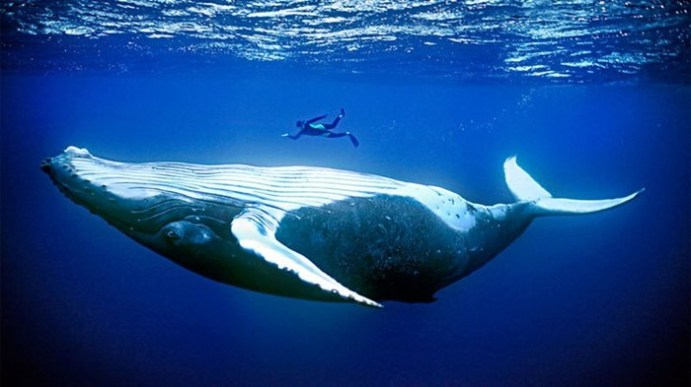 Почему морские млекопитающие такие огромные