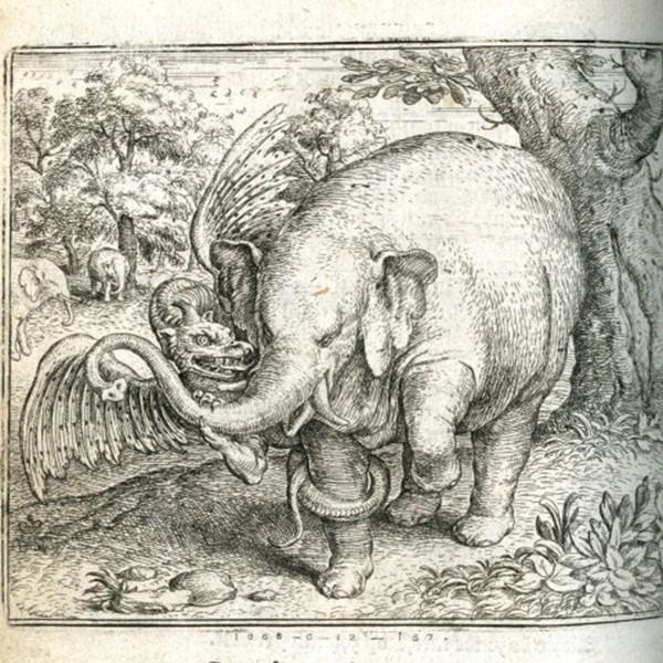 Очень странные представления о животных, в которые люди верили раньше