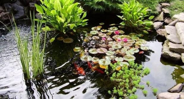 Растения глубоководной зоны пруда