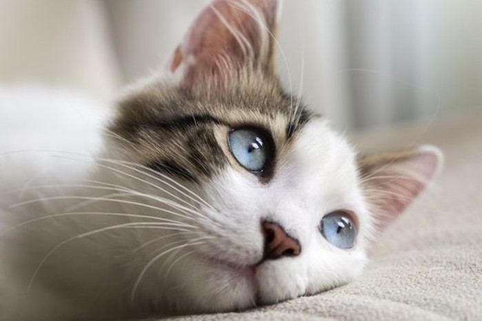 Как кошки видят мир по сравнению с людьми