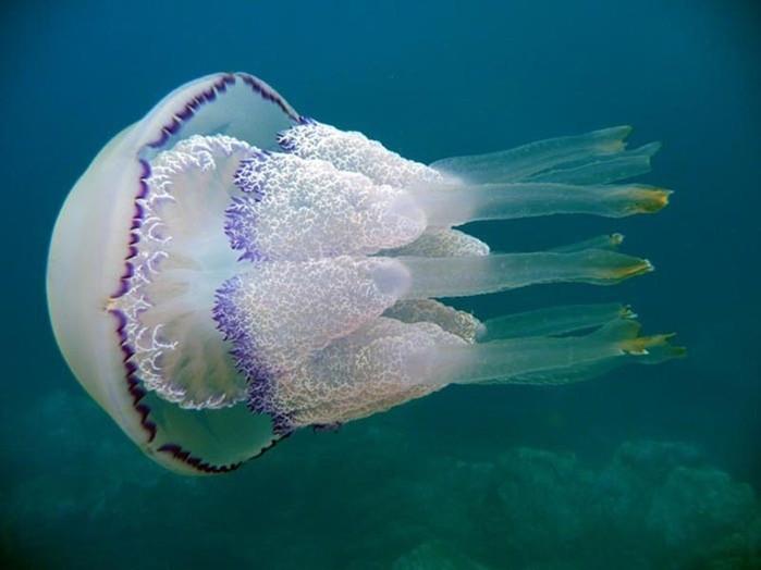 Обитатели Черного моря, представляющие опасность для человека