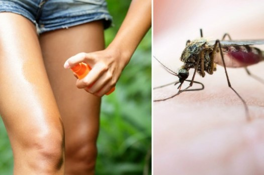 Как сделать очень «вкусный» спрей, который защитит от комаров в любое время года